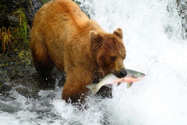 Discover Alaska Image