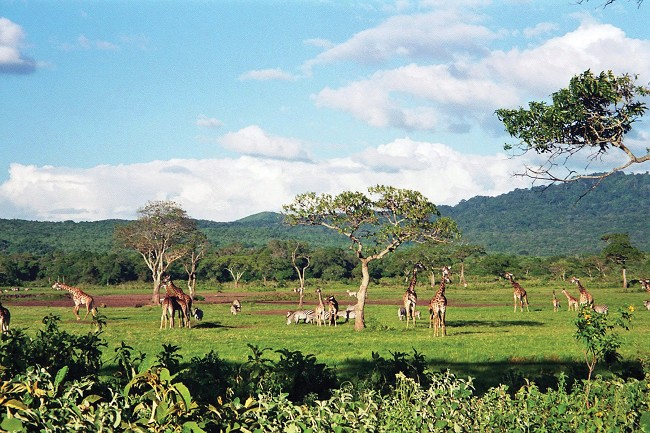 Tanzania Image